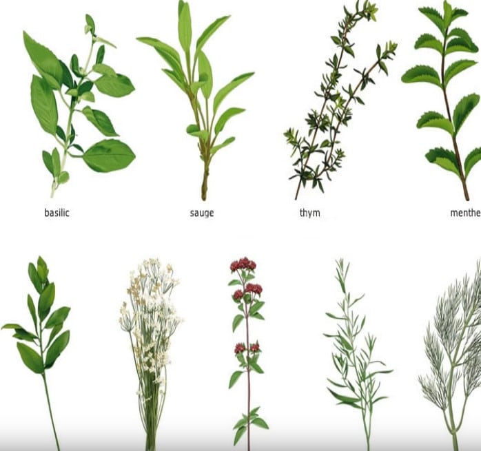 herbes-aromatiques enceinte