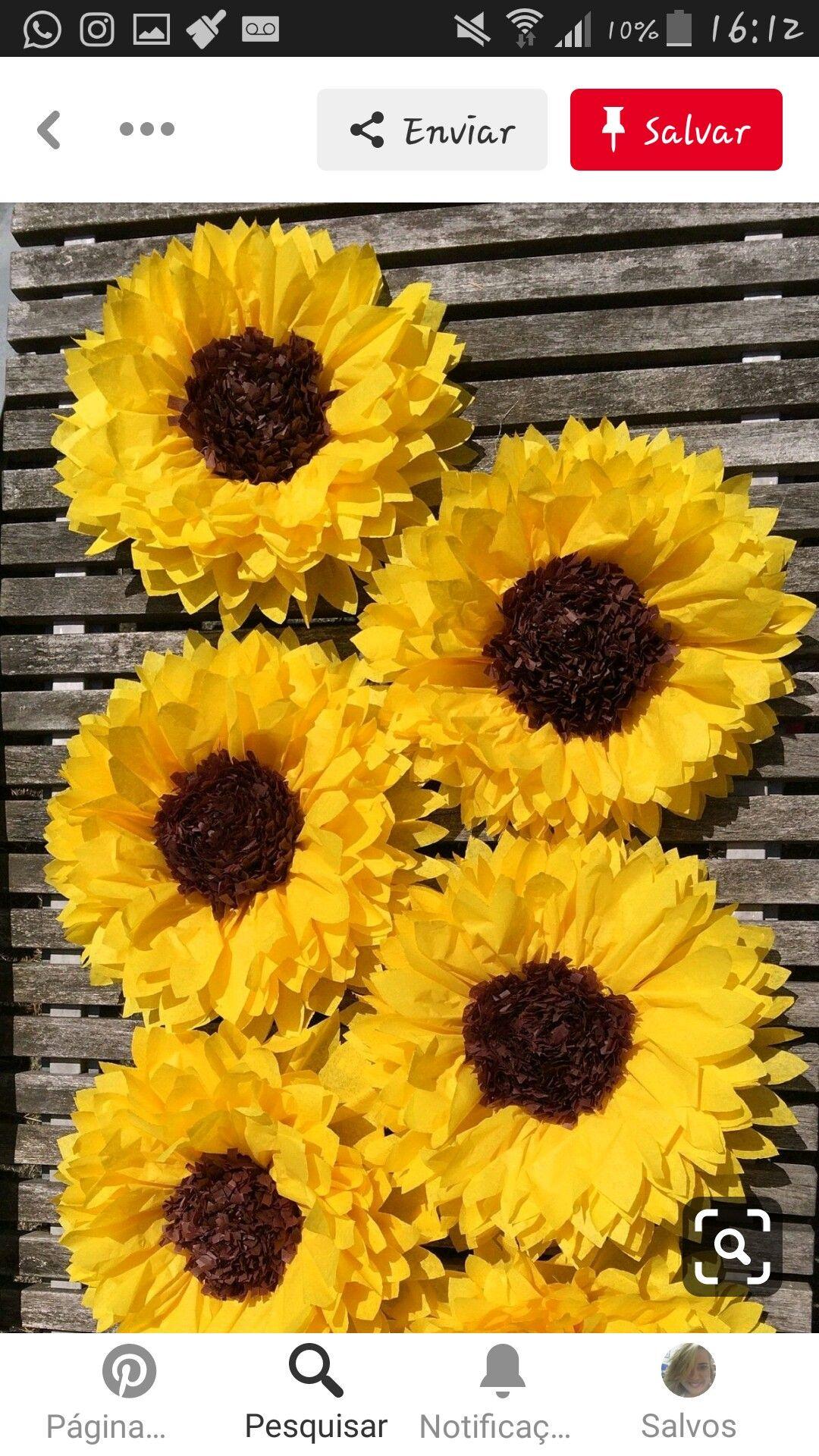 sunflower en grávida
