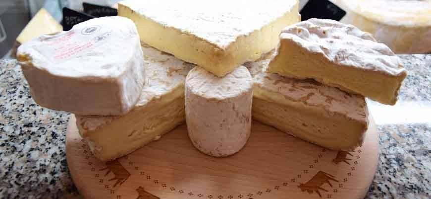 fromage-de-brebis-a-pate-molle-et-croute-fleurie enceinte