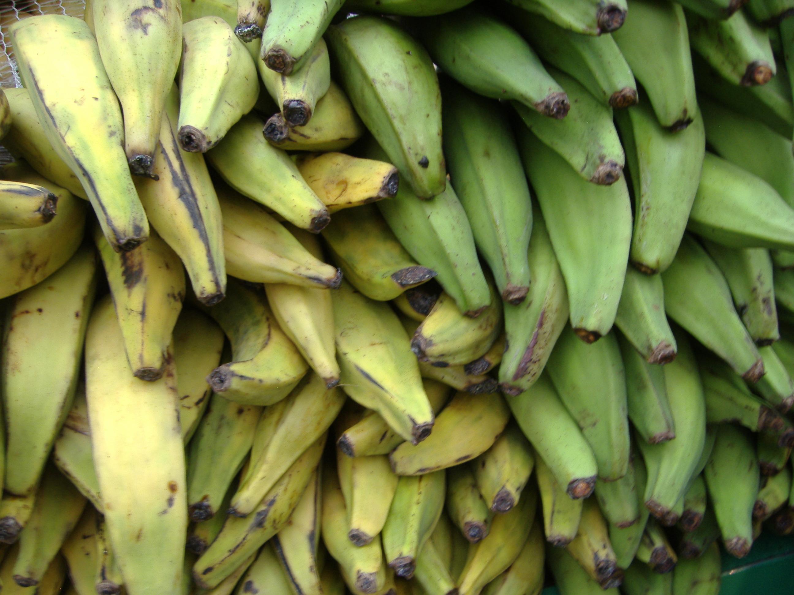 banane-plantain enceinte
