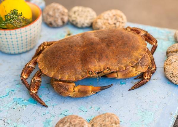 crabe-cuit enceinte