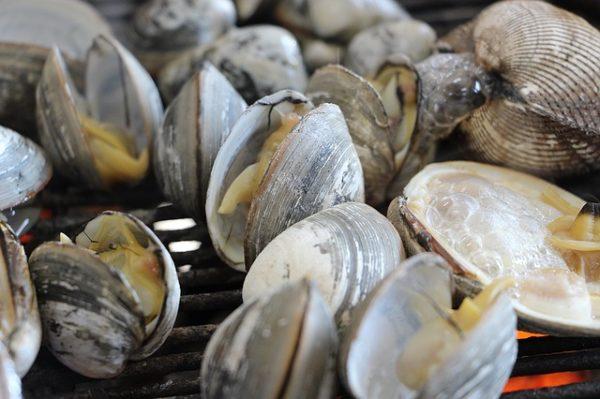 flat-oyster en grávida