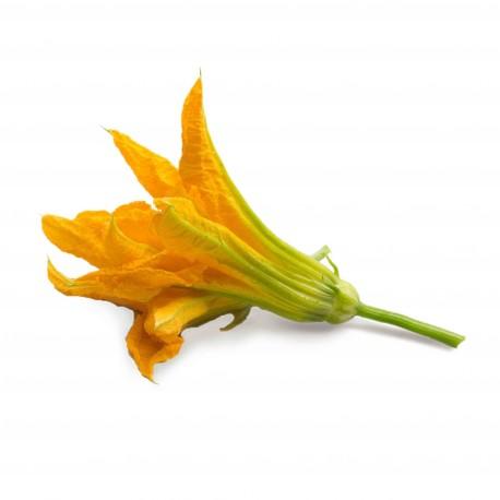 fleur-de-courgette enceinte