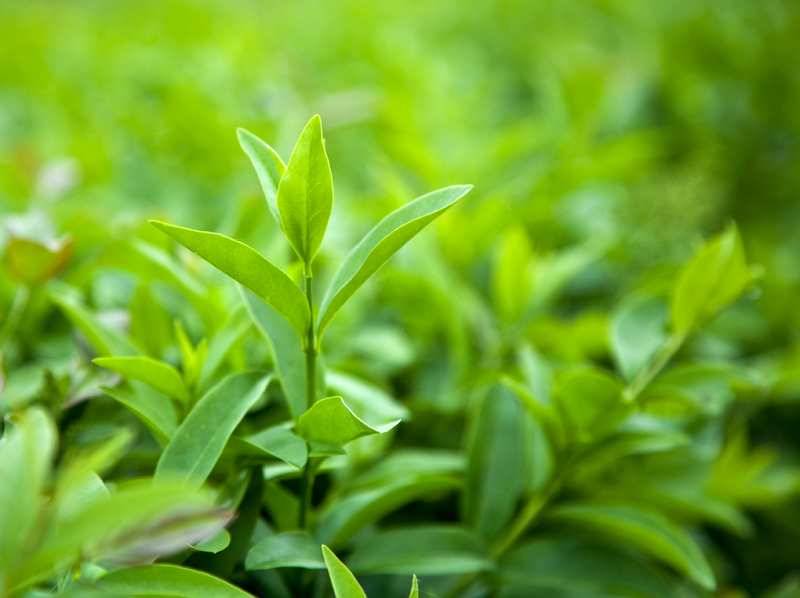 the-vert enceinte